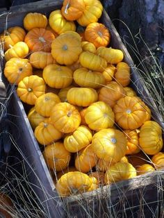 Many MiniPumpkins: You can go traditional, contemporary, country or eclectic when you design your front porch, entryway, door, courtyard or other outdoor space for the fall. Mini pumpkins look more inviting when grouped together. Photo © Lisa Hallett Taylor