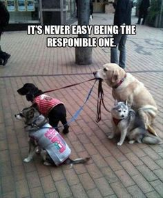 funny dogs-this is sooo Baby D with the boys!
