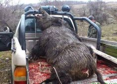 Now this is a Hog! Talk about bacon for days! Boar Hunting, Hunting Guns, Hunting Stuff, Crossbow Hunting, Animals And Pets, Wild Animals, Cover Photos, Wildlife, Ranch