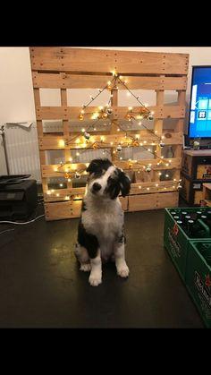 Christmas Time!!