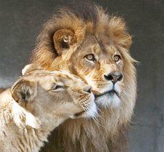 Животные тоже умеют любить...