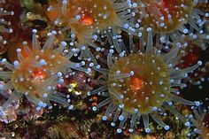 underwater photography | Underwater Photography | ImageBlogs.org | Wonderful Image Island