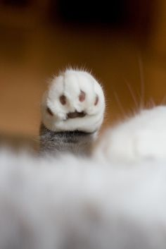 I have so many pictures like this of my cat (and former cats).  Love kitty paws!