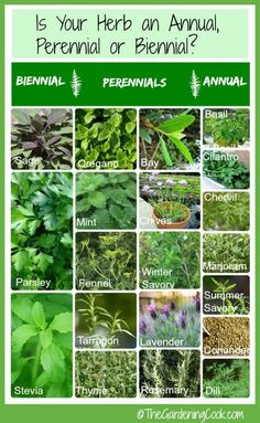 Is your herb an annual, perennial or biennial? This handy chart will tell you everyting you need to know about fresh herbs. http://thegardeningcook.com