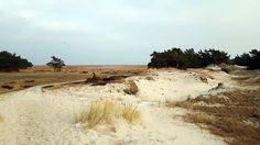 Dünenlandschaft am Darßer Ort (c) FRank Koebsch