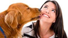 Comprenez ce que pense votre chien