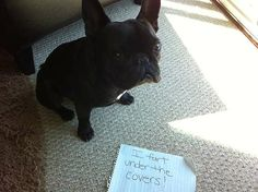"French bulldog confessional fart sign    'I fart underneath the covers""   My Whimsey definitely needs this..."