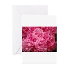 Pale pink roses Greeting Cards