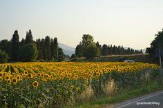 Dica para ver os Girassóis na Toscana