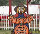 Hill Ridge Farms in Youngsville, NC (Definitely make a visit during their fall festival months - it's the best!)