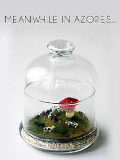 Fascinating Miniature Worlds With A Twist, Captured In Tiny Jars - DesignTAXI.com