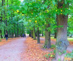 Começando o dia com uma notícia maravilhosa: a Noruega é o primeiro país a proibir o corte de árvores em seu território. Quer saber mais? Acesse nosso blog: ow.ly/BYMC301PUal