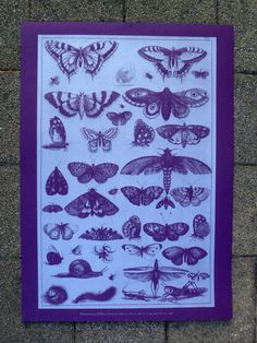 Screen print of Wenceslaus Hollars's '41 Insects'. Heavy purple stock and silver water-based ink. 50 x 70 cm.