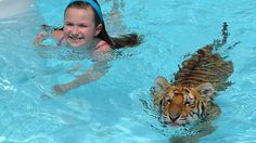 Nothing To Do With Arbroath: Zoo offers swimming with Siberian tiger cub Old Florida, Tampa Florida, Florida Travel, Central Florida, Clearwater Florida, Naples Florida, Kissimmee Florida, Oh The Places You'll Go, Pets