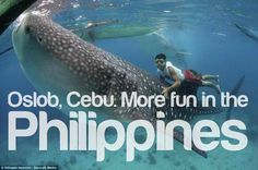 """this is what they call """"whale watching"""" in the Philippines"""