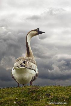 "Titled: ""Looking Like Rain"" by photographer oleymoley"