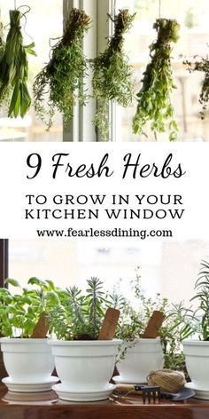 You are going to love growing your own culinary herbs. Here are 9 fresh herbs you can grow in your kitchen window. Perfect for cooking and baking. Sage rosemary basil chives oregano mint parsley thyme and cilantro. Herb Garden In Kitchen, Kitchen Plants, Diy Herb Garden, Herbs In Kitchen, Vegetable Garden, Kitchen Gardening, Herbs Garden, Succulents Garden, Planting Flowers