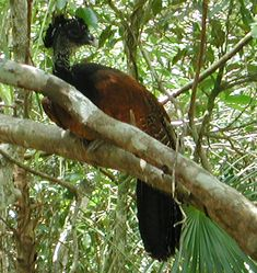 You won't see these birds anywhere else but in Aktun-Chen! http://aktun-chen.com