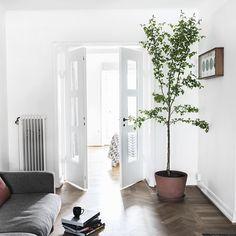 Just nu vill jag bara ta in stora träd och växter i alla miljöer. Här är från förra veckans fotografering för @fantasticfrank. Styling av mig och foto av fina @annamalmbergphoto.
