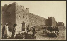 Jerusalem, Israel  ~  Sheep market outside Herod's Gate ~ photo taken between 1900 and 1940