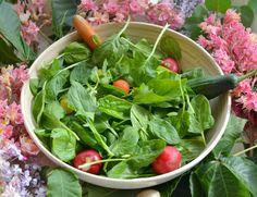 Вегетарианство и веганство - как да избегнем хранителните дефицити
