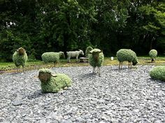 International  Mosaiculture  Exhibition   Montreal - Summer 2013: Flock  of  Sheep, plus one goat.  They are all part of a huge display around the Man Who Planted Trees.  Visit page for more interestng works.  I think the sheep have the perfect plant choice.