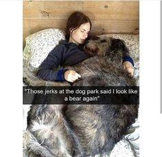 Funny School Memes, Funny Kpop Memes, Funny Animal Memes, Really Funny Memes, Dog Memes, Funny Dogs, Funniest Memes, Hilarious Memes, Offensive Memes