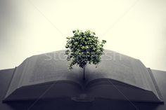 Stock fotó: Fa · növekvő · nyitott · könyv · oktatás · képzelet · kreativitás