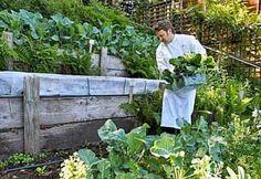 Terraced Sloped Backyard   Sloping Backyard? Terrace Gardening   Planet Natural