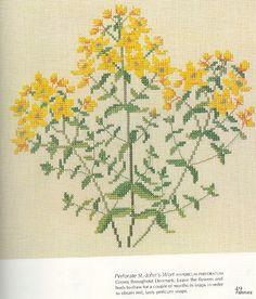 Gallery.ru / Фото #40 - Medicinal Plants - Mosca