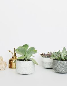 DIY cement pots - these are great for small plants as wedding centerpieces and can be used later in your home.