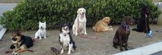 Intermediate Dog Obedience Mission Viejo, California  #Kids #Events