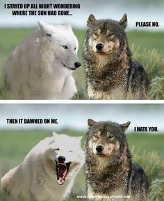 Top 38 Fresh Funny Animal Photos That Are Absolutely Hilarious - Funny Animal Quotes - - Top 38 Fresh Funny Animal Photos That Are Absolutely Hilarious The post Top 38 Fresh Funny Animal Photos That Are Absolutely Hilarious appeared first on Gag Dad. Funny Animal Jokes, Animal Puns, Funny Animal Photos, Cute Funny Animals, Funny Dogs, Funny Animal Sayings, Funny Husky Pictures, Funny Pictures Hilarious, Funny Puppies