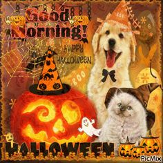Halloween QUOTATION – Image : Quotes about Halloween – Description Good Morning Halloween Sharing is Caring – Hey can you Share this Quote !