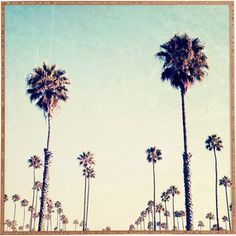 California Palm Trees Framed Wall Art