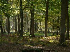 Kalenderblatt: 21. März ist internationaler Tag des Waldes  Mehr unter >>> http://a24.me/1g7e0RX