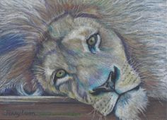 Original ACEO lion drawing by Jenny Luan using color pencil #Realism