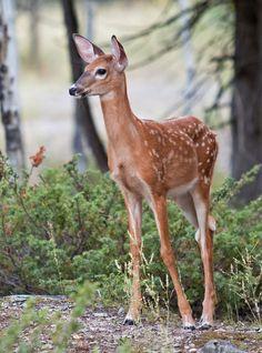 "beautiful-wildlife: ""Age of Innocense by Tim Carey """