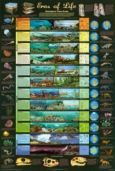 Eras of Life Geology Educational Science Chart Poster Prints