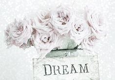 ╭♥╯Roses in Dream╭♥╯ - Flowers Wallpaper ID 1919822 - Desktop Nexus Nature All You Need Is Love, Give It To Me, Hopeless Romantic, My Flower, Dusty Rose, Pretty Flowers, Pastel Colors, Flower Decorations, Daydream