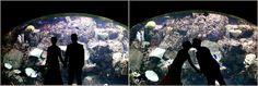 Long Beach Wedding Photography Photographer Aquarium of the Pacific Ocean Wedding Photography-6