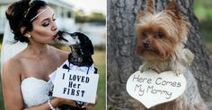 14 Wedding Signs For Dogs That Are Just Plain Paw-some | HuffPost