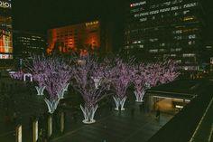 Fukuoka: Ohori-koen - Tricia Will Go Places Cherry Blossom Japan, Cherry Blossom Season, Japan Spring Fashion, Tricia Gosingtian, Filipino Fashion, Pink Petals, Sense Of Place, Travel Outfits, Fukuoka