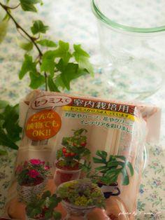 道のりを記憶に残して: セラミスとWECKの瓶でアイビーの室内用植え替え/花・ガーデニング