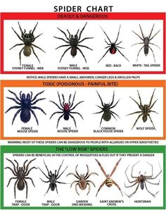 Come check out our wonderful wildlife! | 19 Reasons Why Arachnophobes Should Give Australia A Miss