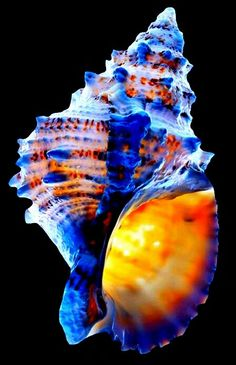 Olive Oil Bottles, Mosaic Projects, Ocean Creatures, Shell Art, Nautilus, Artist Art, Sea Glass, Vivid Colors, Sea Shells