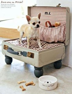 Upcycle old suitcase as small dog beg with maroon and white checked pillow...LOVE!