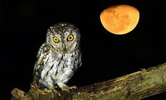 Happy OWL-Oween!  Fun Facts About Owls