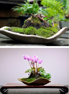 cyclamen version mini jardin japonais Terrarium Plants, Bonsai Plants, Bonsai Garden, Succulents Garden, Garden Plants, Planting Flowers, Indoor Bonsai Tree, Mini Bonsai, Orquideas Cymbidium