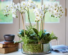 Like the miniature gardens the Victorian plant hunters brought back from the Himalayan foothills, this orchid and fern centrepiece is mesmerizingly beautiful and